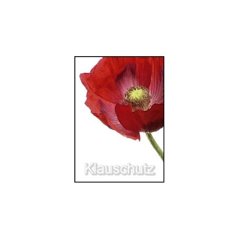 Blume Mohn rot | Blumenkarten Postkarten