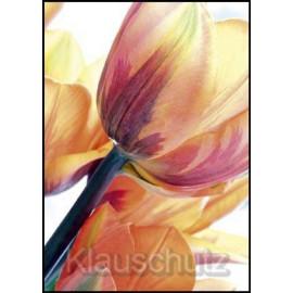 Postkarten Blumen - Tulpen