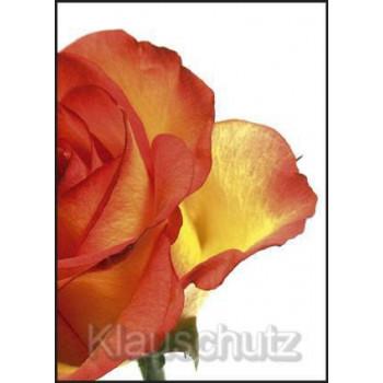 Postkarte Blumen - Rose orange