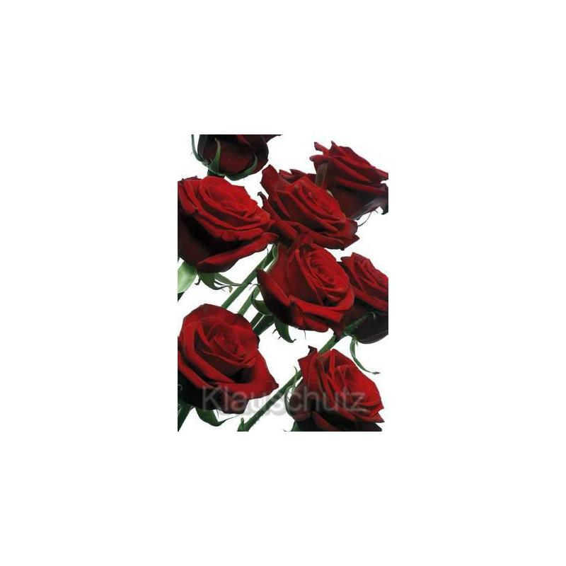Rote Rosen Postkarte Blumenkarte