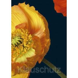 Blumenkarten Postkarten   Mohn gelb und rot