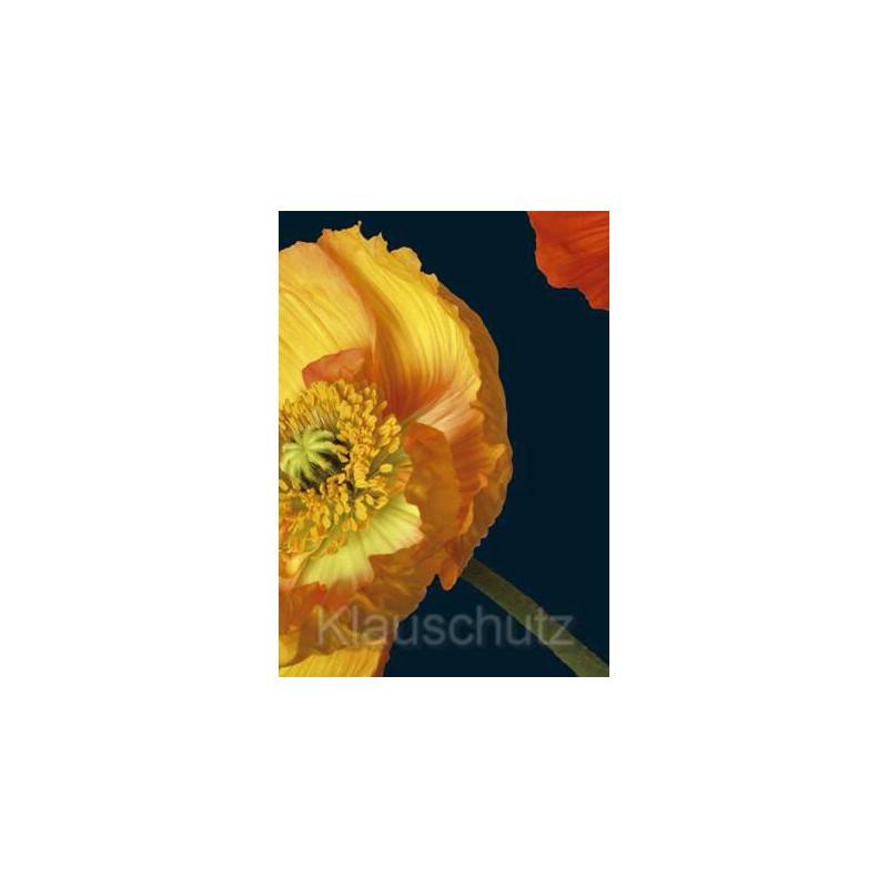 Blumenkarten Postkarten | Mohn gelb und rot