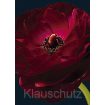 Postkarten Blumenkarten | Ranunkel rot
