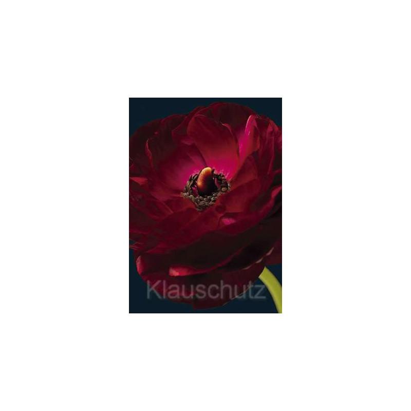 Postkartenparadies Postkarte Blumenkarte | Ranunkel rot