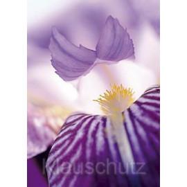 Schwertlilie   Blumenkarten - Postkartenparadies Postkarte