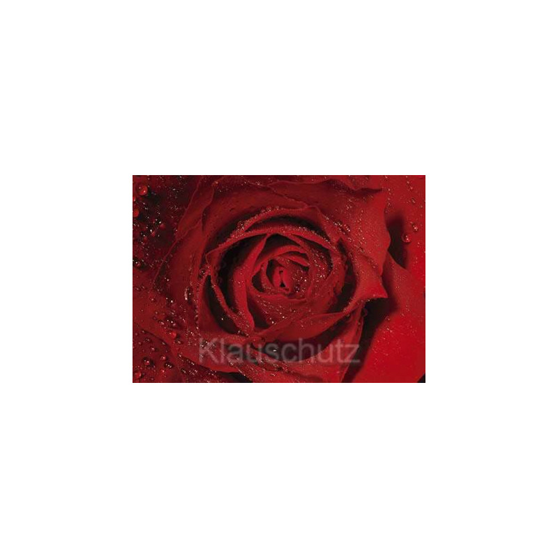 Postkarte Blumenkarte Rose Nahaufnahme