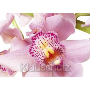 Orchidee - Schöne Blumen Postkarten