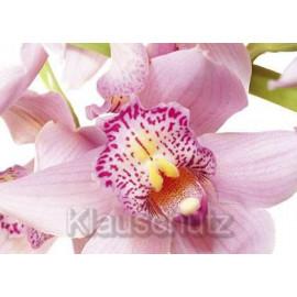 Orchidee - Schöne Blumen Postkarten vom Postkartenparadies