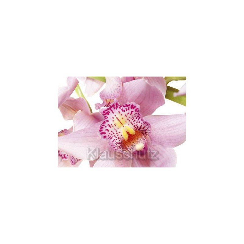 postkarten blumen orchidee. Black Bedroom Furniture Sets. Home Design Ideas