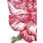 Nelke rot / weiß Nahaufnahme | Postkarte Blumenkarte