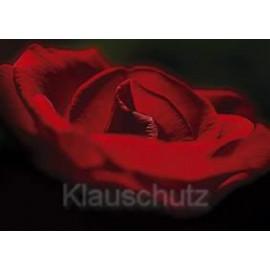 Blumenkarte Postkarte - Rose rot