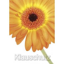 Blumenkarten Postkarten - Gerbera orange