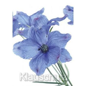 Blumenkarten Postkarten - Rittersporn blau