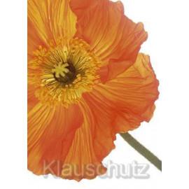 Postkarten Blumen - Mohn orange