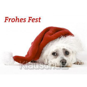 Postkarte Anlässe Weihnachten / Weihnachtskarten Frohes Fest!  Hund mit Weihnachtsmütze