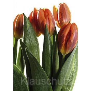 Blumenkarten Postkarten | Tulpen orange