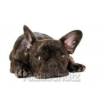 Fotokarte Postkarte vom Postkartenparadies: Trauriger Hund