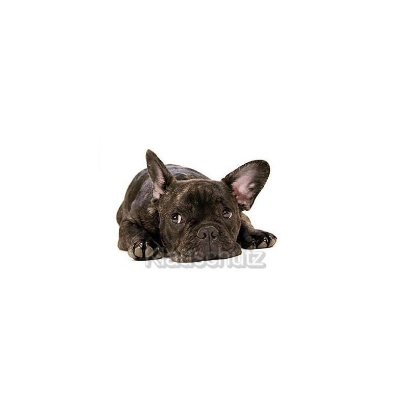 Fotokarte Postkarte: Trauriger Hund