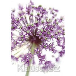 Blumen Postkarte Allium