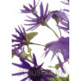 Blumenkarten Postkarten - Senetti lila