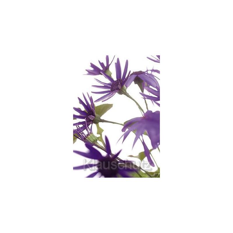 Postkartenparadies Blumenkarten Postkarten - Senetti lila