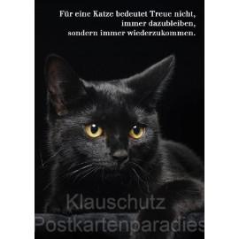 Für eine Katze bedeutet Treue nicht, immer dazubleiben, sondern immer wiederzukommen.