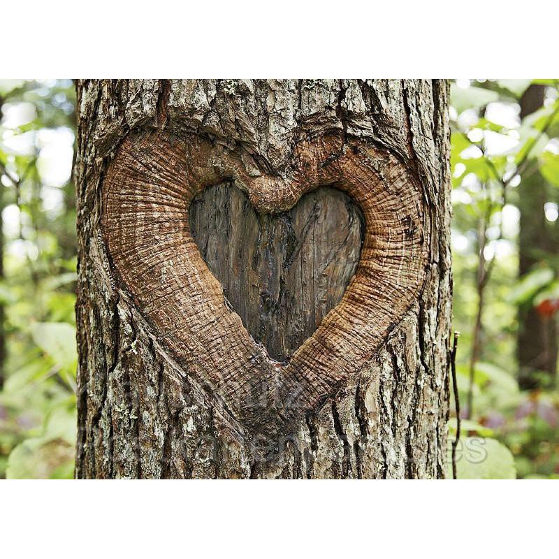 Romantische Fotokarte Postkarte: Herz im Baum