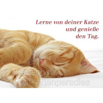 Sprüchekarte Postkarte vom Postkartenparadies: Lerne von deiner Katze und genieße den Tag