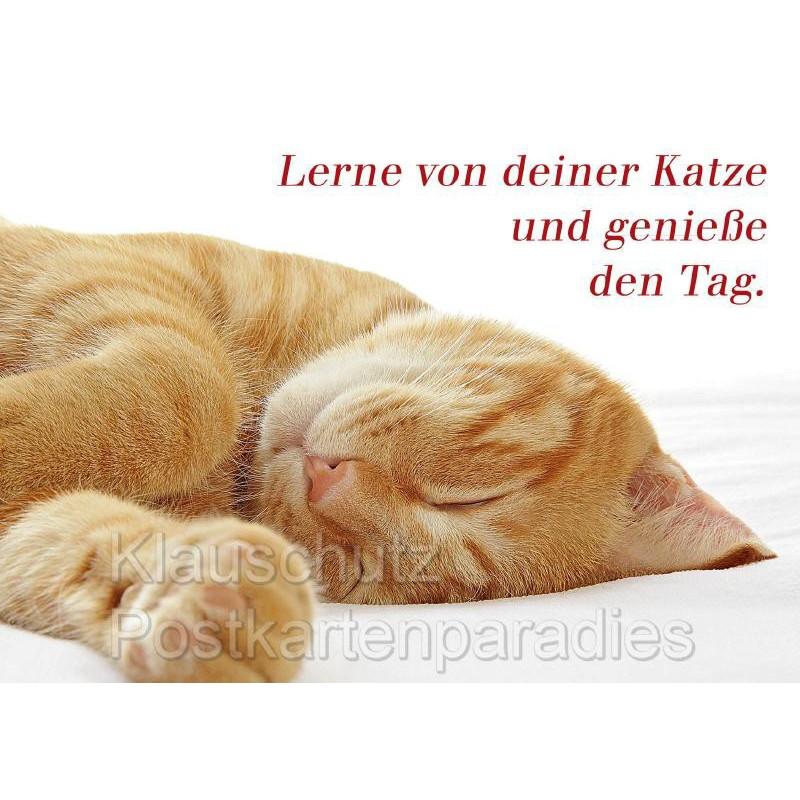 Sprüchekarte Postkarte: Lerne von deiner Katze und genieße den Tag