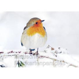 Rotkehlchen im Schnee - Foto Postkarte vom Postkartenparadies