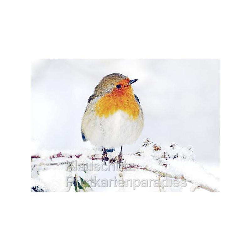 Foto Postkarten | Rotkehlchen im Schnee