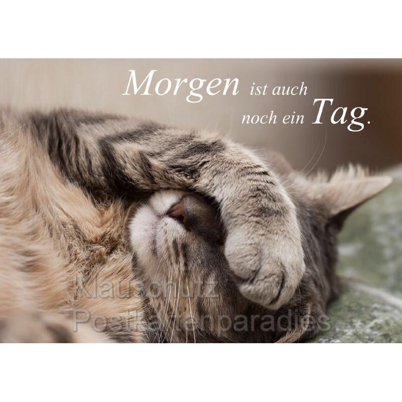 Katzen Postkarte - Morgen ist auch noch ein Tag.