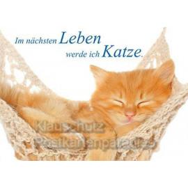 Fotosprüche: Katzen Postkarte - Im nächsten Leben werde ich Katze