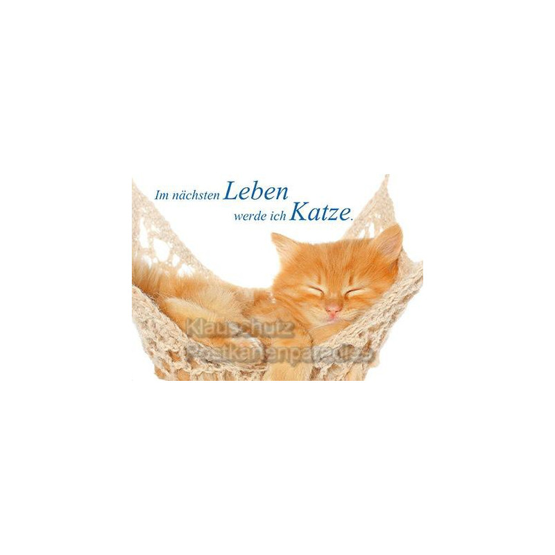 Fotosprüche: Katzen Postkarte vom Postkartenparadies - Im nächsten Leben werde ich Katze