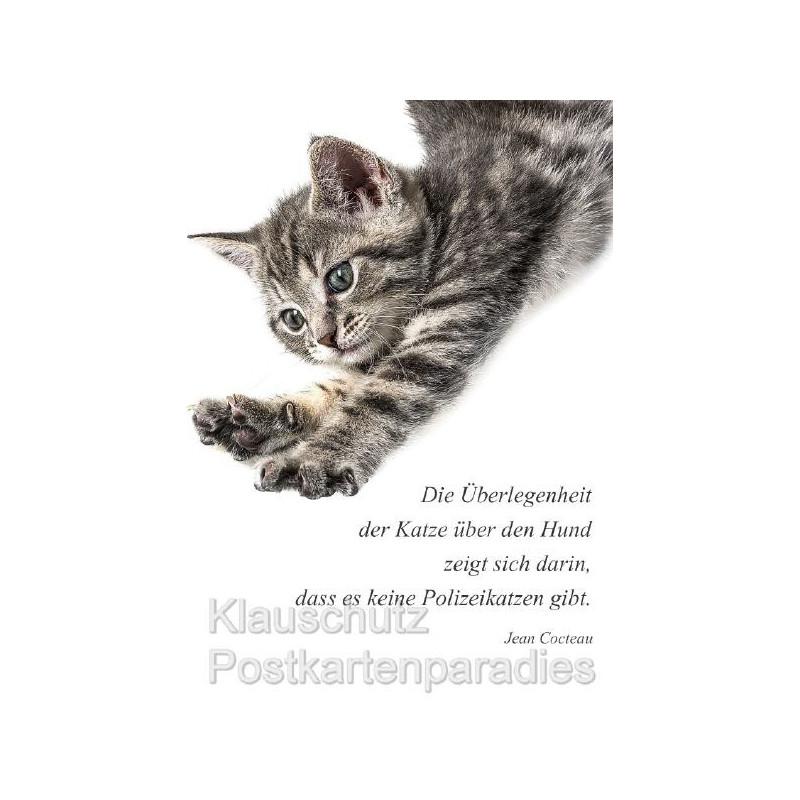 Die Überlegenheit der Katze über den Hund zeigt sich darin, dass es keine Polizeikatzen gibt. Jean Cocteau