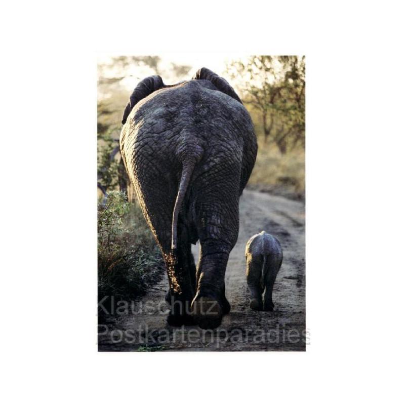 Postkarte / Fotokarte: Elefanten Kleinstfamilie