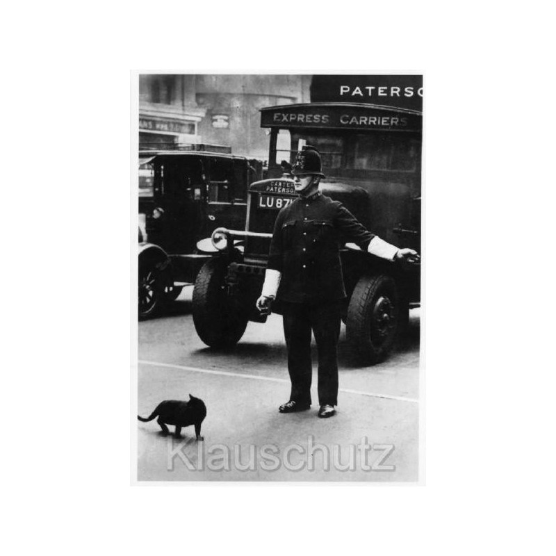 schwarz-weiß (s/w) Foto Postkarte Katze hat Vorfahrt