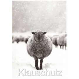 Schaf im Schnee - Postkarten Fotokarten von Rannenberg