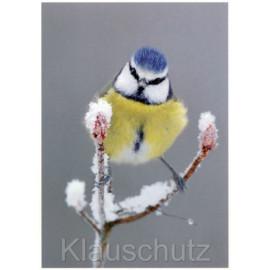 Blaumeise auf Ast im Schnee im Winter Postkarte