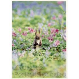 Eichhörnchen im Blumenfeld - Tier Postkarte von Rannenberg