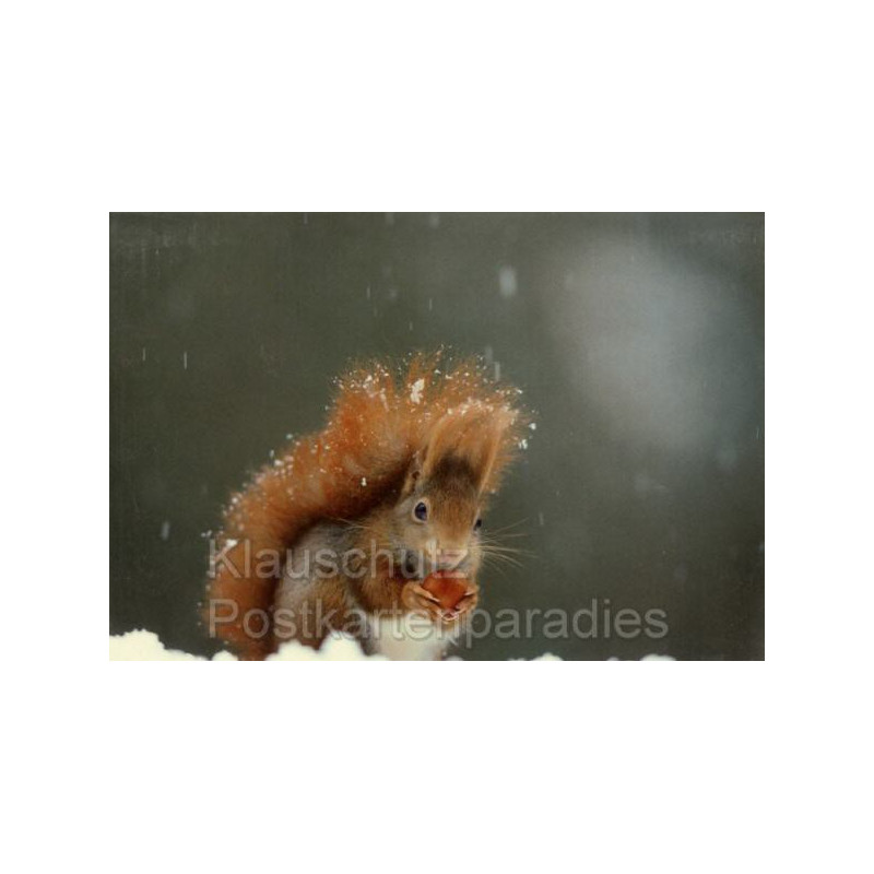 Doppelkarten Weihnachten -  Eichhörnchen im Schnee mit Nuss