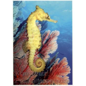 Dorniges Seepferdchen - Fotokarten mit Tieren von SkoKo
