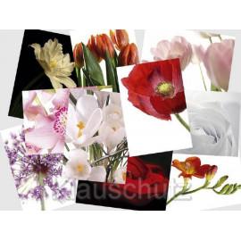 10 Blumen Postkarten vom Postkartenparadies, bunt gemischt, aus dem aktuellen Sortiment.