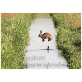 Gewagter Sprung | Hase Osterkarte