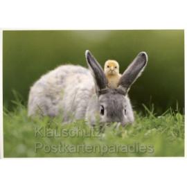 Osterhase und Küken | Postkarte Ostern