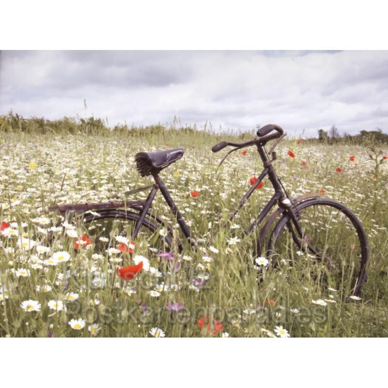 Fahrrader Rannenberg Postkartenbucher