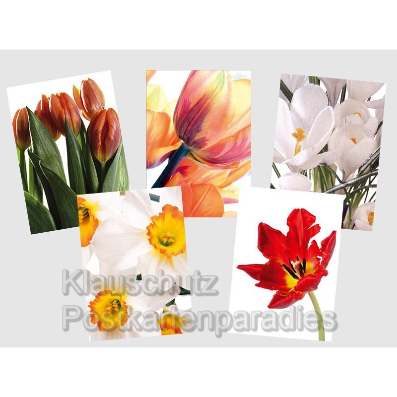 Blumenpaket Frühling - 5 Postkarten zum Sparpreis