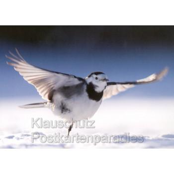 Postkartenbuch Vögel im Winter - 14 Postkarten mit Vögeln im Winter