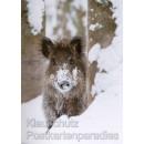 14 tierische Winterimpressionen - Das Postkartenbuch mit 14 Postkarten von heimischen Tieren im Winter