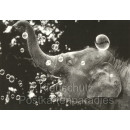 Elefant macht Seifenblasen - Discordia Foto Postkarte